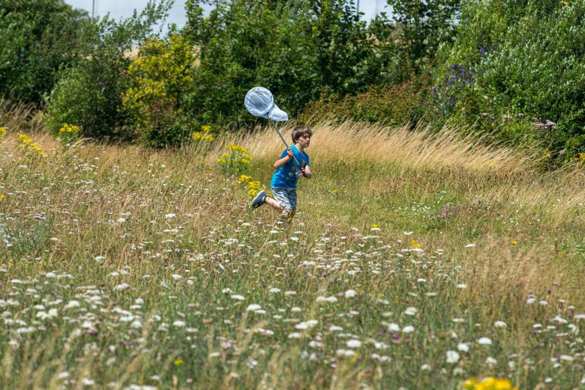 A child bug catching in the chalk grasland of the the South Downs National Park