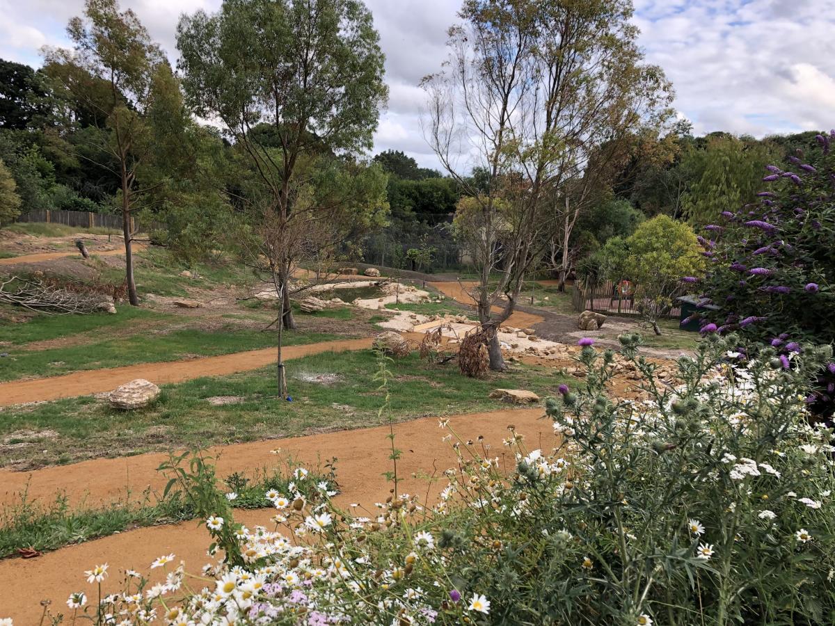 Marwell Zoo - New Wallaby Walkthrough 2020 (4)